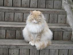 просто кошка